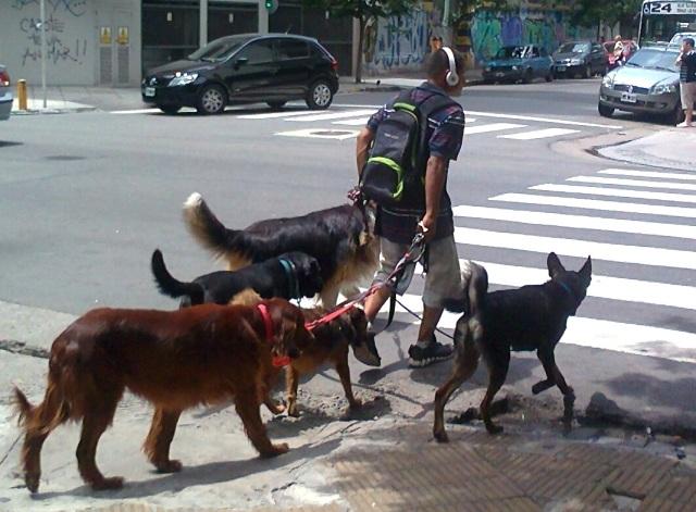 PAsseador de cachorros